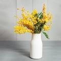 Alors que l'hiver tire doucement sa révérence, le mimosa égaye nos maisons. Il symbolise l'élégance, la tendresse et délivre un message d'amitié. Il représente aussi l'énergie féminine, il est d'ailleurs l'emblème de la journée du droit des femmes le 8 mars.
